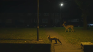 Canon Europe + Urban Deer - J. Walter Thompson Europe