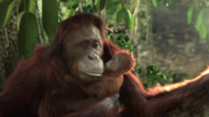 Kimberly Clark + Cottonelle-Heart of Borneo - J. Walter Thompson Sydney