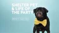AD COUNCIL + Start a story – adopt. - J. Walter Thompson New York
