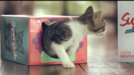 Central Veterinaria + Think about the box - J. Walter Thompson Costa Rica